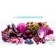 【   七大紫色蔬果讓你越吃越年輕!! 花青素是什么?   】